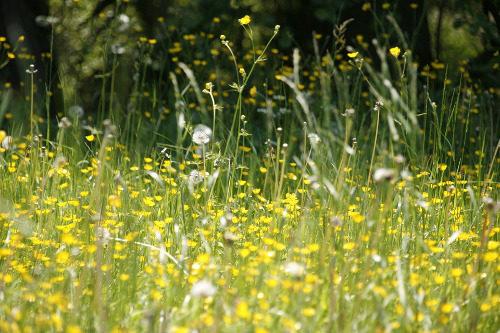 Calendario Pollini Allergie.Allergie Stagionali Ai Pollini Il Calendario Mese Per Mese