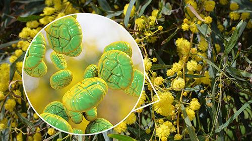 allergia respiratoria pollini